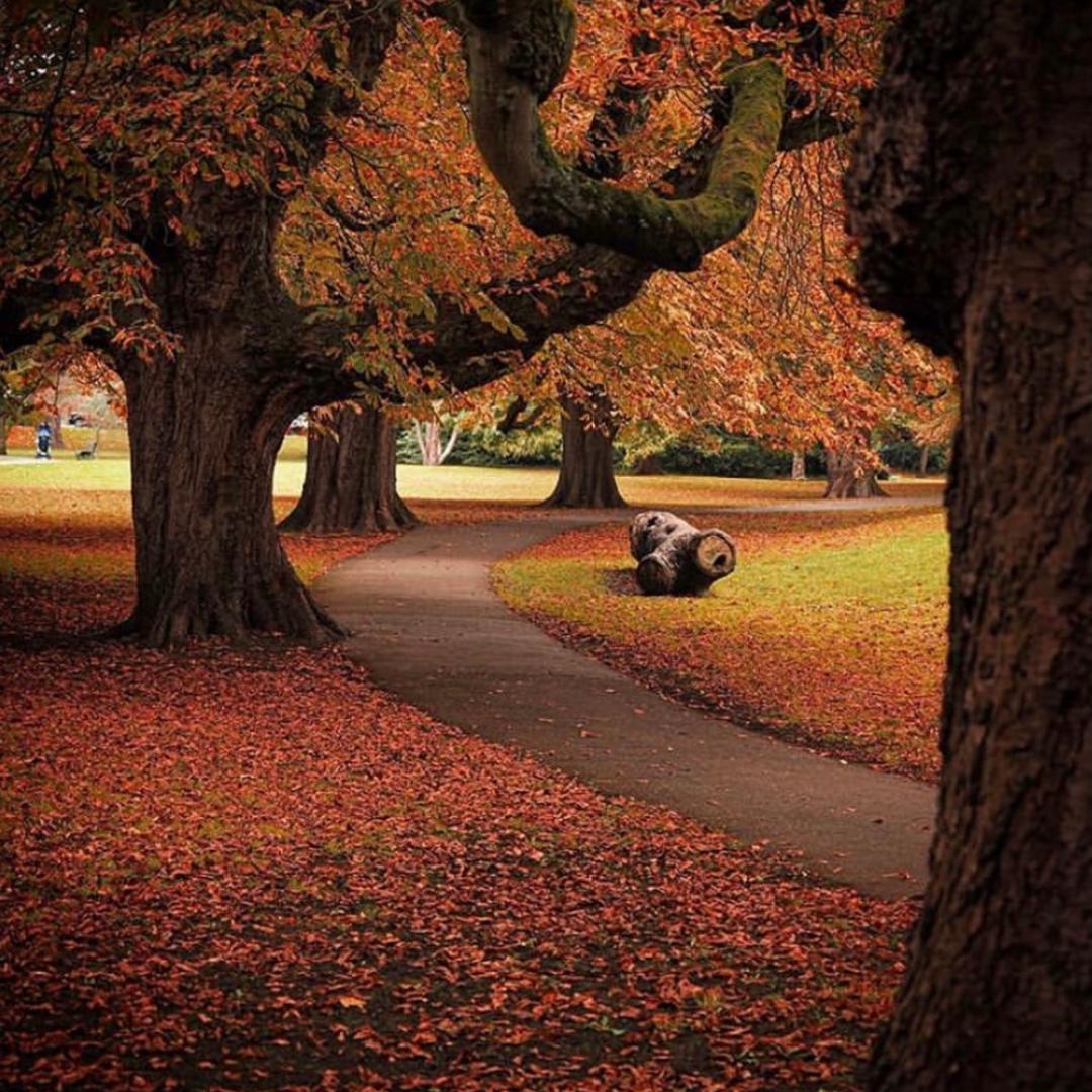 Henrietta Park